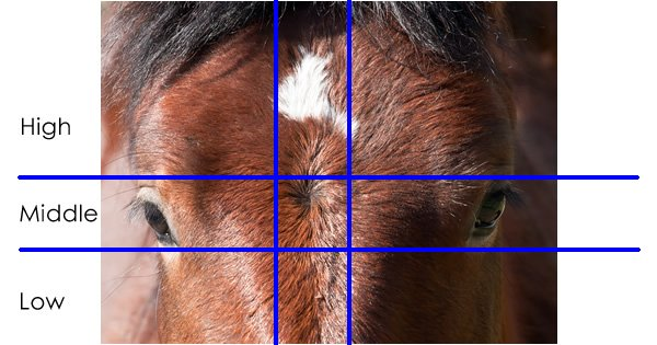 Placement of Horse Whorls
